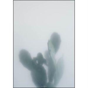 Kristina Dam - Cactus I - poster 70x100 cm