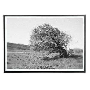Image of   Applicata - Plakat - Windy tree - 30x40 cm